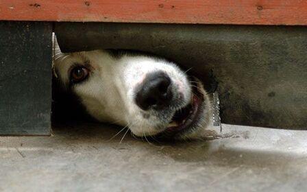 Если собака соседа не дает спать, что делать, как наказать соседа?