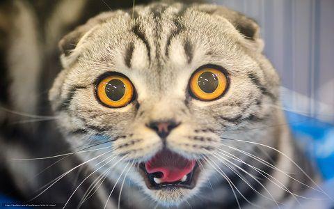 Заявление на возврат кошки в магазин
