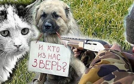 Статья за убийство животных