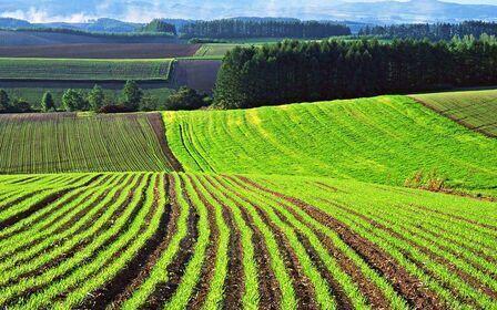 Земля сельхозназначения: понятие и виды