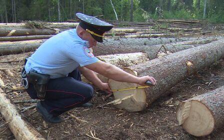 Незаконная вырубка леса - понятие, ответственность и факты