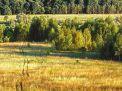 Аренда земель лесного фонда