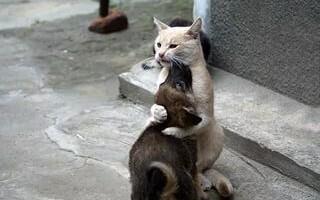 Жестокое обращение с животными. Ответственность за данное преступление.