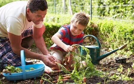 Формы ведения гражданами садоводства, огородничества и дачного хозяйства