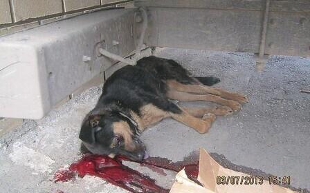 Убили собаку