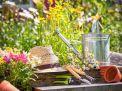 Создание садоводческих, огороднических объединений и их права и обязанности